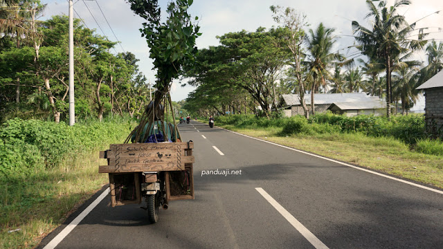 Perjalanan ke Sendangbiru membawa Pohon Beringin