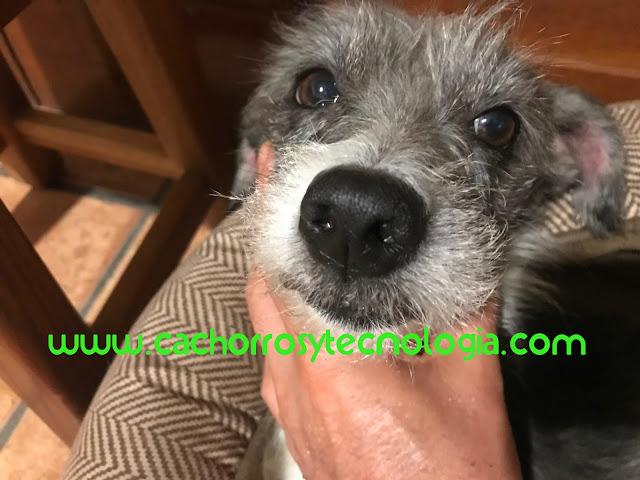 Gala nariz perro dog huella dactilar puppy cachorro shurlonrad tecnologia