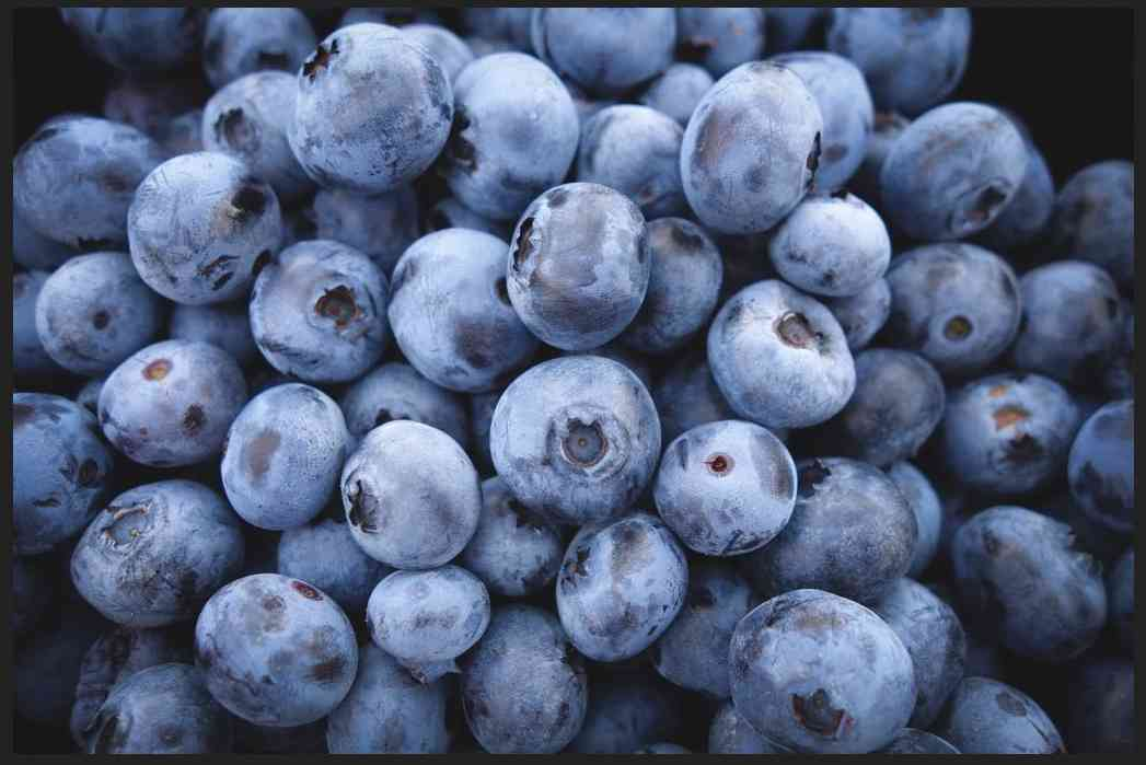 Blueberries -King of Antioxidant Foods