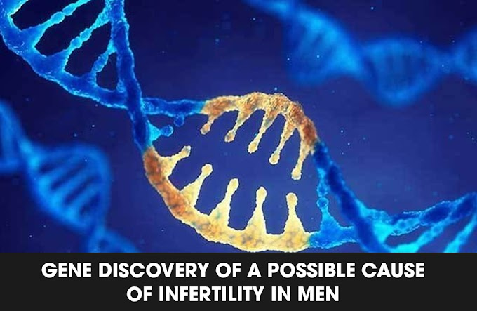 Gene Discovery Of a Possible Cause of Infertility In Men