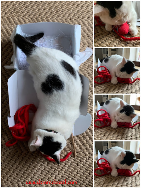 What's In The Box ©BionicBasil® Gus & Bella Take Meowt Valentine's Box - Latecomer Smooch Makes Up For Missed Time
