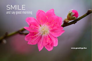 Smile and say good morning beautiful pink flower background image