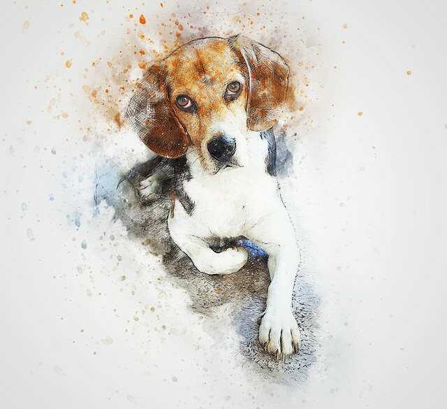 dog cartoon images hd download