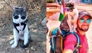 Bella, el gato mochilero y el maltrato animal