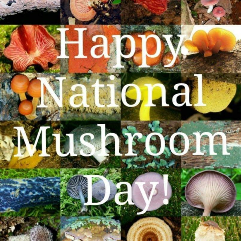 National Mushroom Day Wishes pics free download