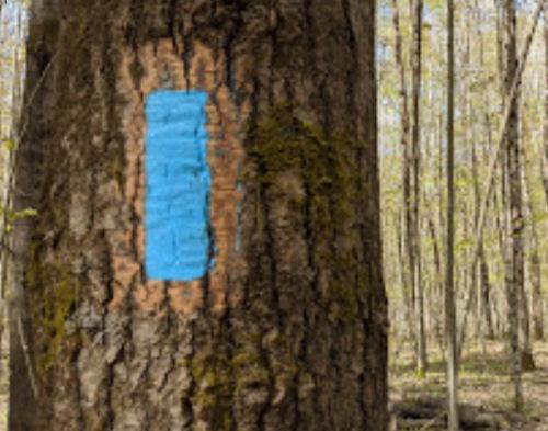 blue trail blaze