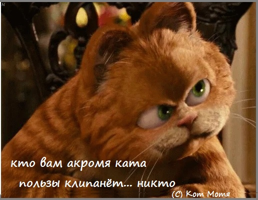 Блог Кота Моти  1s4uEransNA