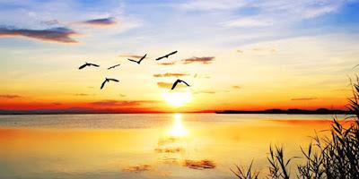 Αποδημητικά πτηνά. Ακολουθεί το κείμενο: Και τώρα έρχεται η ατέλειωτη νύχτα   Το καλοκαίρι ξέφτισε τα πούπουλά του στις γωνιές του δρόμου και στις ακρογιαλιές γυρίζεις ακόμα μισόγυμνος εσύ πάνω στ' αχνάρια των πουλιών που έφυγαν σφίγγω τα χείλη μου, φιλώ ευλαβικά τα χέρια σου αντίλαλος μες στα μαλλιά από σάπιο μήλο το καλοκαίρι κύλησε κι εμείς χωρίζουμε   Πρίγκηπα, δε μιλάς και λέω η ώρα αργεί ακόμα. Βάζω το χέρι στον ώμο σου και λέω στ' αποκαΐδια των ζεστών σπιτιών που υπήρξαμε είσαι ακόμα ένας χτύπος αγάπης στη μαλακή φωνή σου τρέμει η ελπίδα μου για σένα ζω τη σκοτεινιά μιας άνοιξης που παραπαίει λέω αυτό το σώμα είναι η καρδιά μου σωστή   Μ' αφήνεις, Άρχοντα. Το καλοκαίρι έφυγε. Η βουή της φθινοπωρινής θάλασσας αργά σταλάζει το τέλος που είναι πάντα πνεύμα και δάκρυ φωτεινός στρόβιλος, ήχος καθάριου νερού, εγκαρτέρηση πως έτσι θα πάνε όλα ώς το τέλος. Ιδωμένα σ' ένα καινούριο όραμα που μας μεθάει εκβιάζει άσκοπα λόγια και μικρές κραυγές μας κάνει αδέρφια