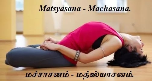 மச்சாசனம் - அர்த்த மச்சாசனம் - Matsyasana - Machasana - Half Fish Pose.