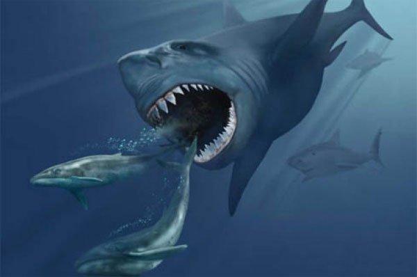 Cá mập khổng lồ Megalodon vẫn đang sống và ẩn náu dưới đáy đại dương?