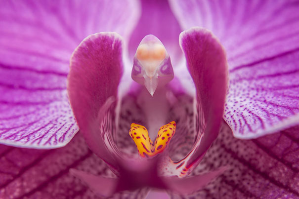 flowers-look-like-animals-people-monkeys-orchids-pareidolia-2