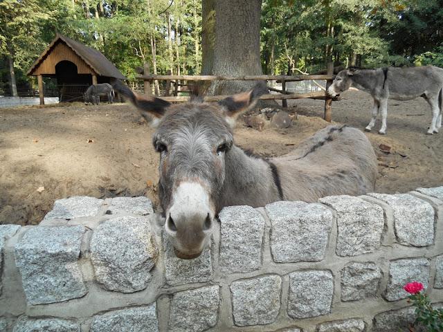 zwierzęta kopytne, wybieg dla osłów, domek, zoo