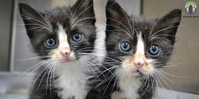China has started selling cloned cats
