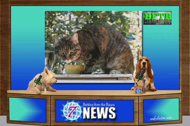 BFTB NETWoof News reports on cat raising lynx cub.