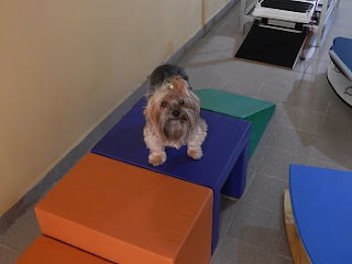 perda de massa muscular em cães