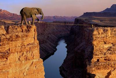fotomontaje de un elefante
