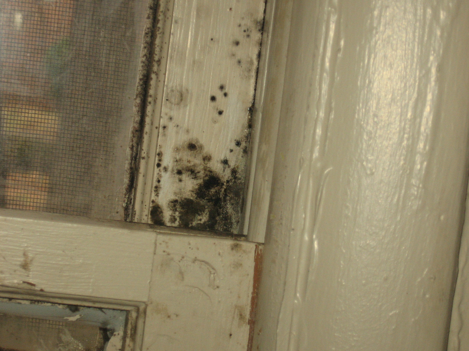 Ncsu pdic household molds what hurricane irene left behind - What to do about mold ...