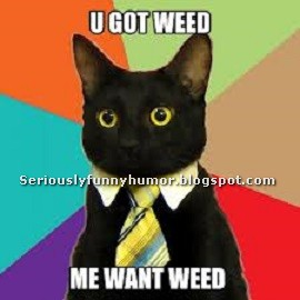 Funny cat with a tie - U GOT WEED? ME WANT WEED!