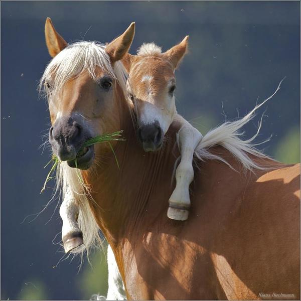fotos tiernas caballos abrazados