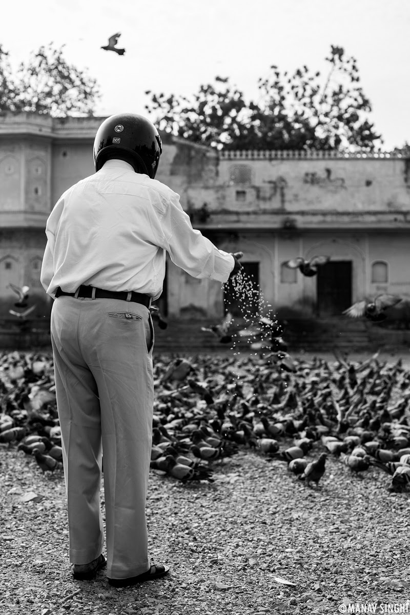 Man Feeding Pigeons, Safely.
