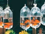 ▷ Peces de Agua dulce que pueden vivir sin Oxigeno, ¿Cual es la verdad?