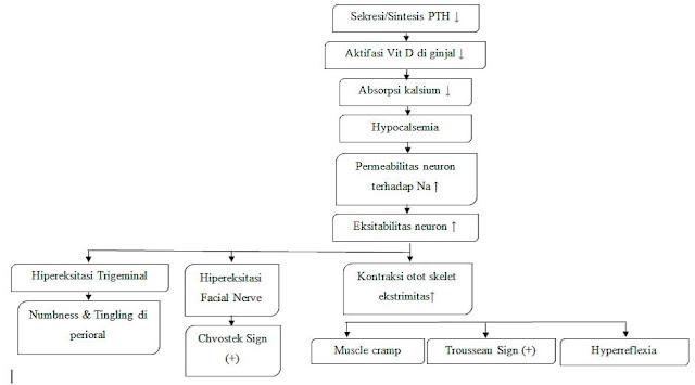 pathogenesis hypoparathyroid
