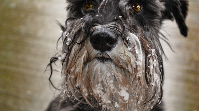 Managing Excessive Shedding in Dogs
