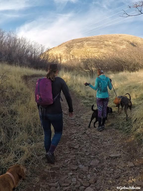 Hiking Mt. Van Cott, Hiking in Utah with Dogs