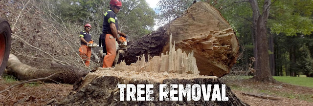Tree-removal-services-Perth