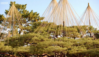 yukitsuri - trees strung with string