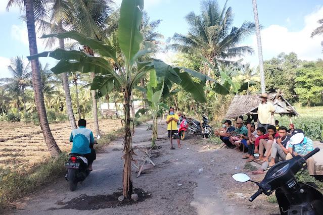 Dicuekin pemerintah, warga Denggen tanam pisang di jalan rusak
