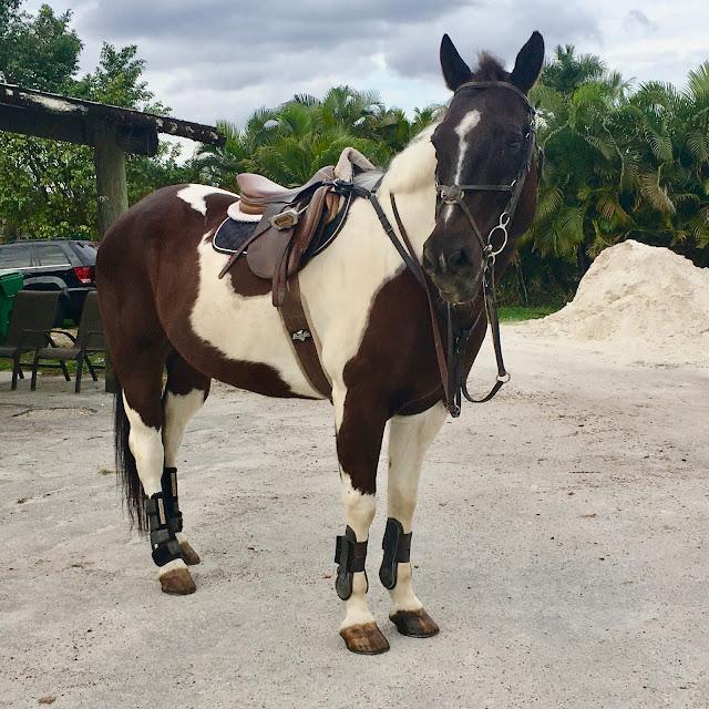 Preventative Maintenance & Lessons in Horsemanship