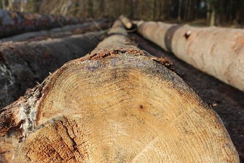 Wood, Log, Sawn, Cut Down, Holzstapel, Firewood