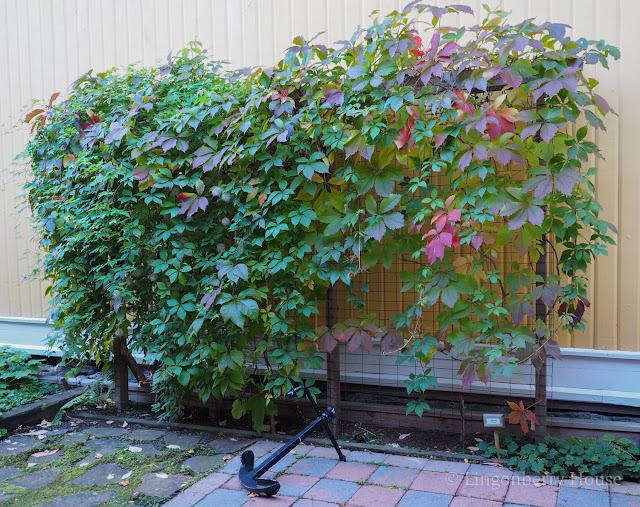 lingonberryhouse, mitä on rakkaus, tukipilarit, viherseinä, syksy, mielen ihmeet, autumn, flower wall