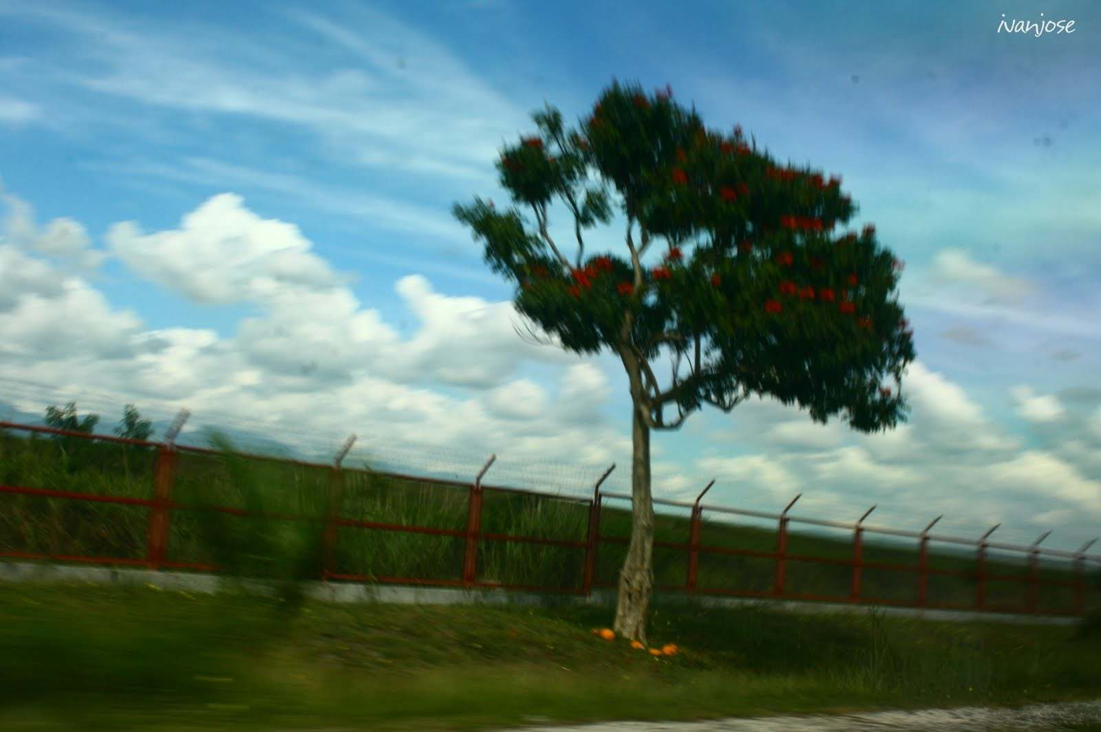 A lone tree by the roadside in Mindanao