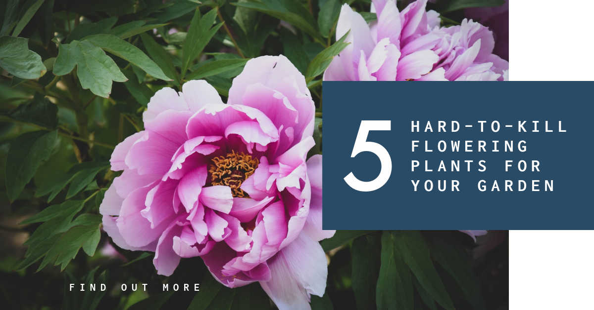 HARD TO KILL PLANTS FOR YOUR FLOWER GARDEN