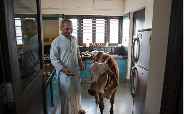 કોણ છે આ કરોડપતિ ગુજરાતી જે બંગલામાં રાખે છે વાછરડીઓ,બાળકો કરતા પણ વધારે આપે છે પ્રેમ