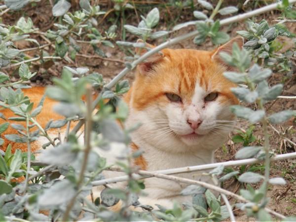adopta a un gato en malaga