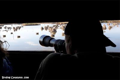 Fotografiant ocells des de l'aguait