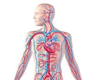 Damar Tıkanıklığı Neden Olur ile ilgili aramalar bacak damar tıkanıklığı egzersizleri  kalp damar tıkanıklığı nasıl açılır  kol damar tıkanıklığı belirtileri  kalp damar tıkanıklığı hangi testle anlaşılır  bacak damar tıkanıklığı belirtileri forum  damar tıkanıklığı bitkisel çözüm  damar tıkanıklığına ne iyi gelir  beyin damar tıkanıklığı neden olur
