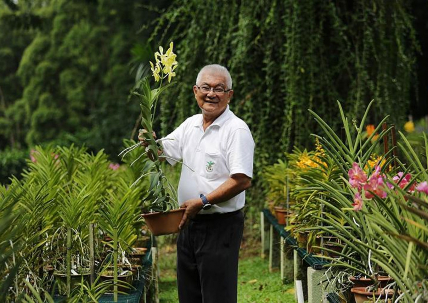 National Orchid Garden nursery manager David Lim says it is usually the hybrid's mother that determines its flower's size and shape.