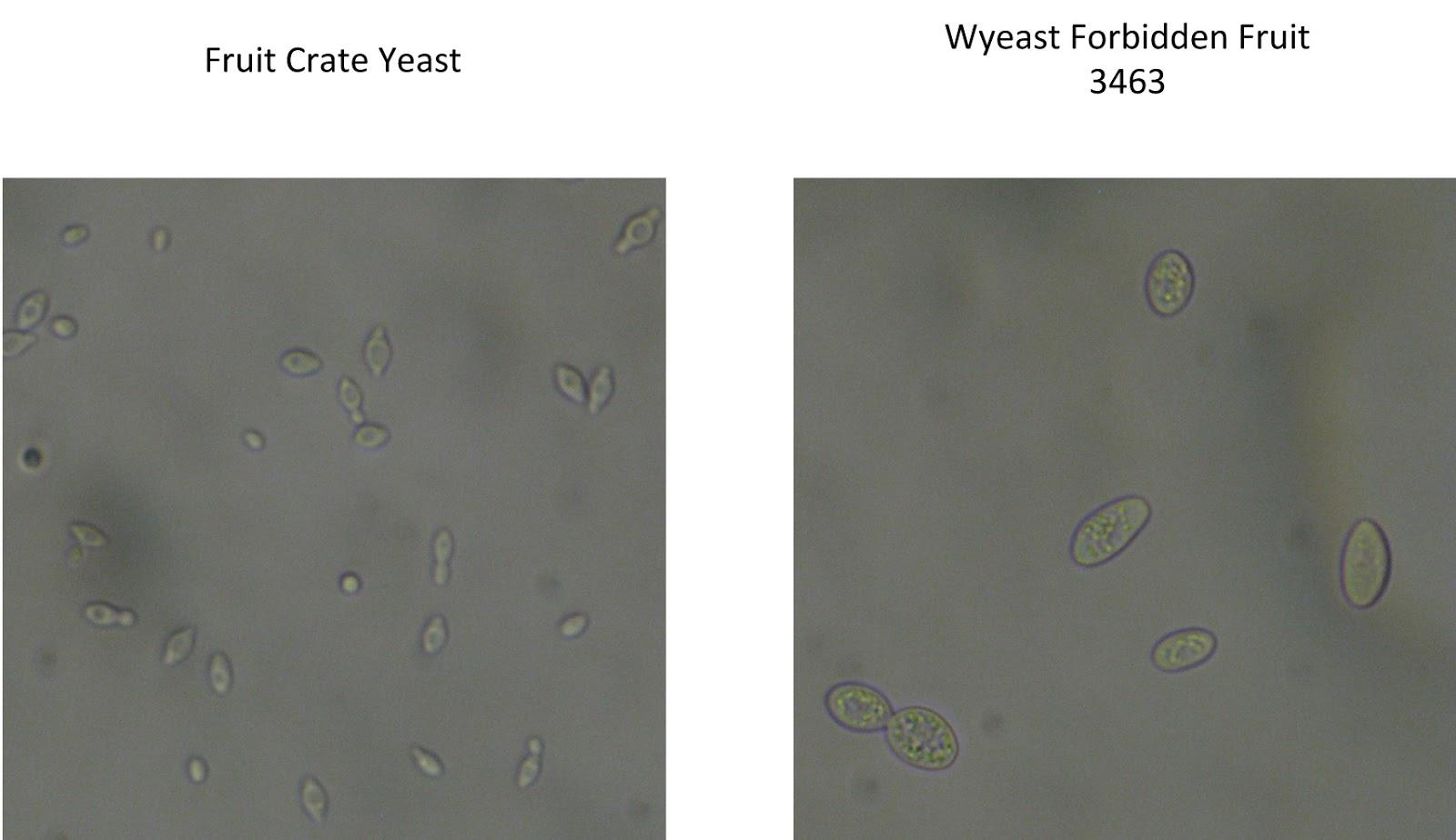 Another Wild Yeast Identification Test