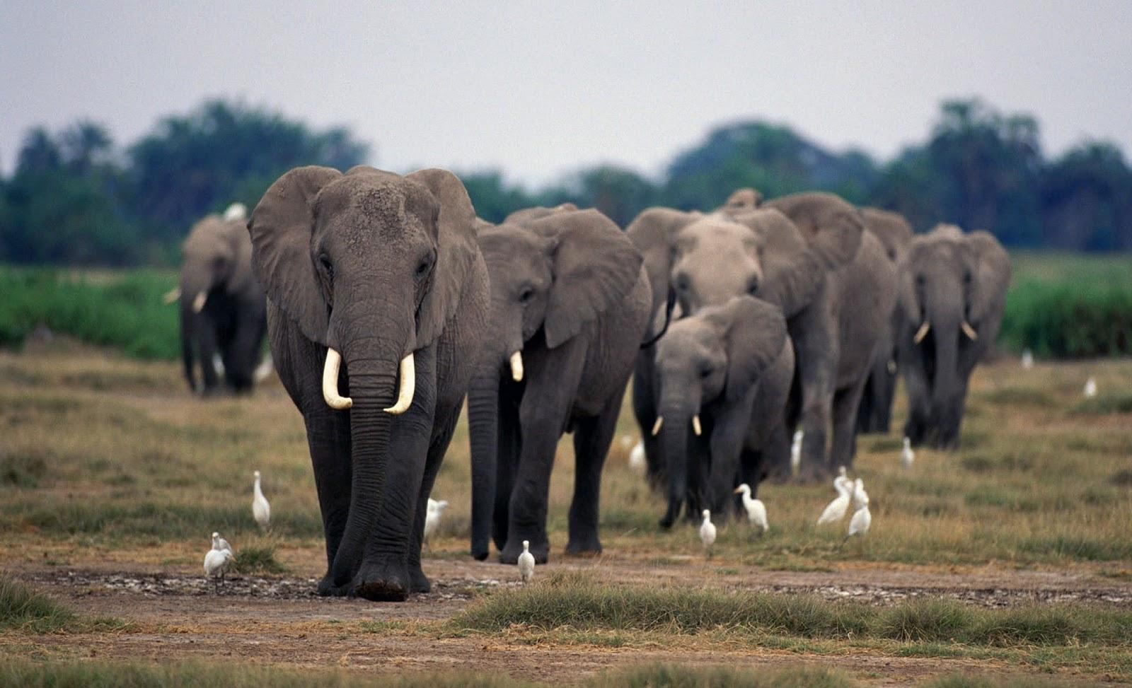 elephants wallpapers world - photo #20