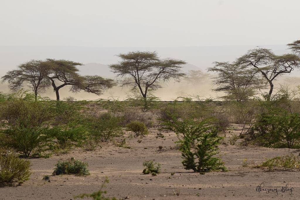 Podróż po Etiopii - część 26 (ostatnia) - Park Narodowy Awash ... i wracamy do domu.