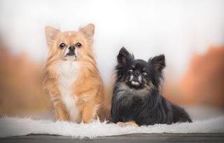 Ödüllü Komik Hayvan Fotoğrafları ile ilgili aramalar komik yazılı hayvan resmi ödüllü hayvan fotoğrafları komik hayvan resmi indir en güzel hayvanlar resmi hayvan resimleri toplu hayvan resmi değişik hayvan fotoğrafları hayvan görselleri