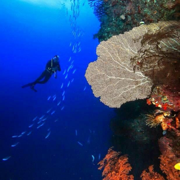 Diving-kas-turkey-3 Top Diving Reefs