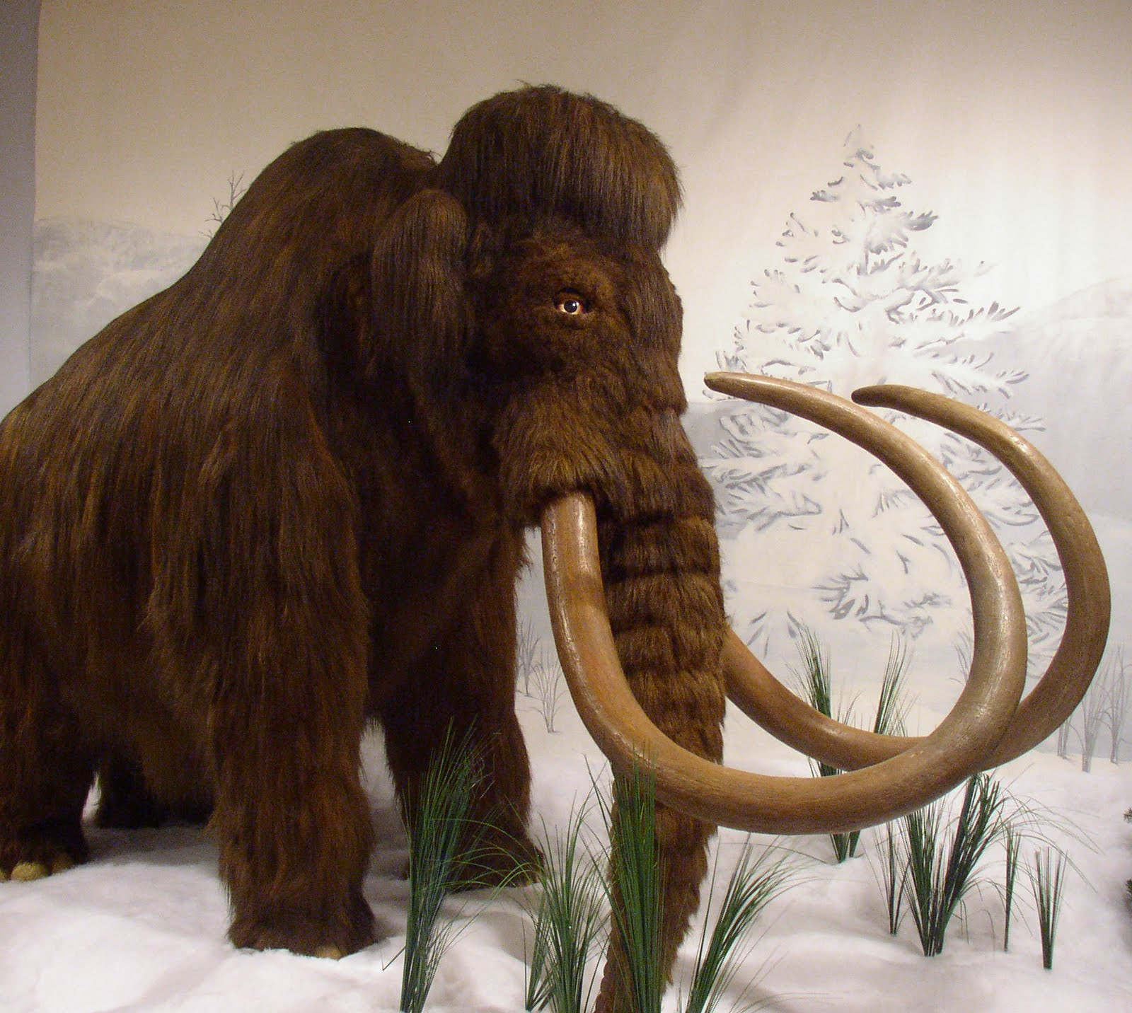 Woolly Mammoth on Parts Of A Plant