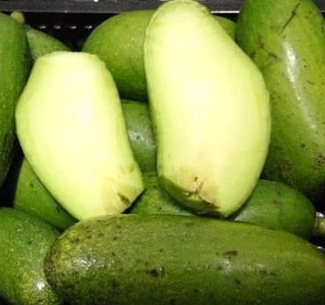 Melayani Eceran! Bibit tanaman buah alpukat non biji unggul Kota Bogor #bibit buah