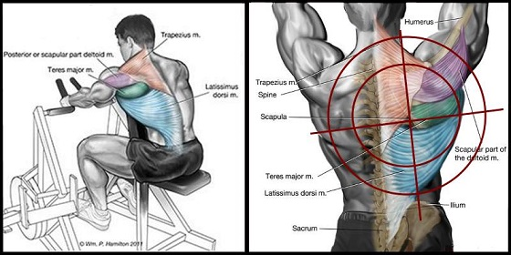 Build A Bigger Back For This Routine