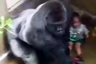 Cincinnati zoo shooting of Harambe the gorilla